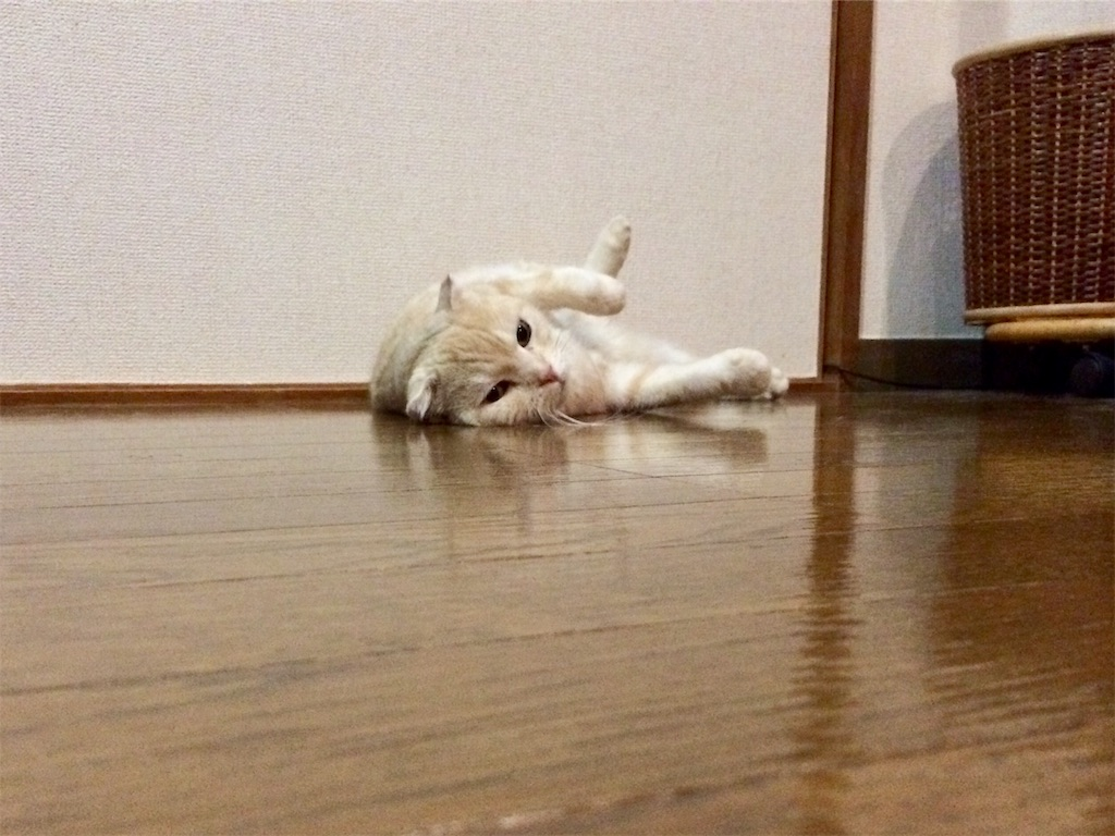 f:id:yutosuna:20200820081623j:image
