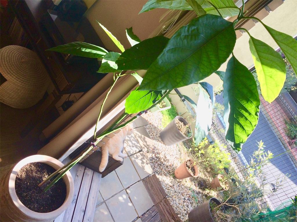 f:id:yutosuna:20201116084223j:image