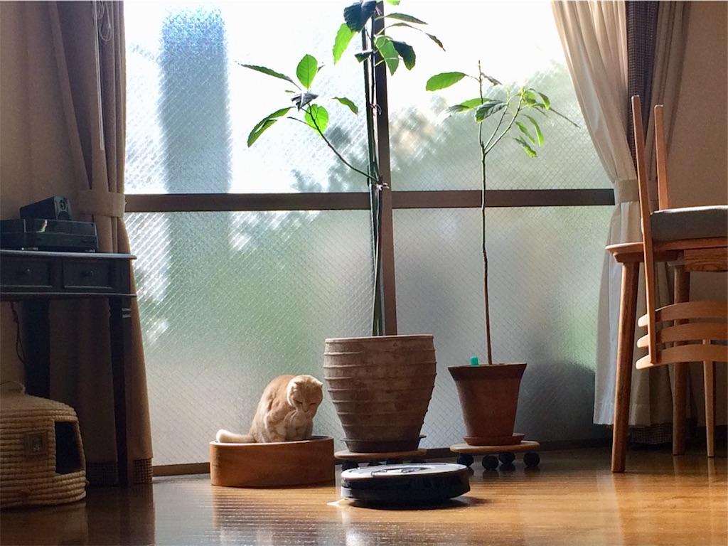 f:id:yutosuna:20201214054241j:image