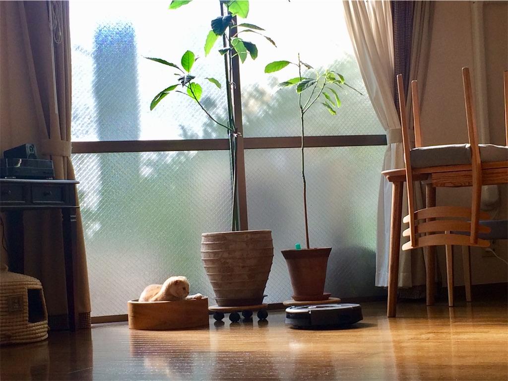 f:id:yutosuna:20201214054248j:image