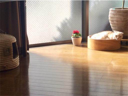 f:id:yutosuna:20210205084312j:image