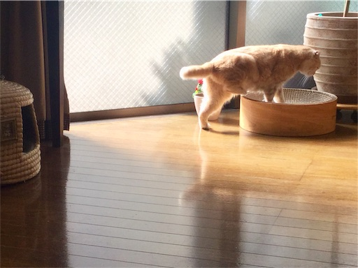 f:id:yutosuna:20210205084316j:image
