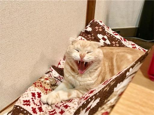 f:id:yutosuna:20210301064639j:image