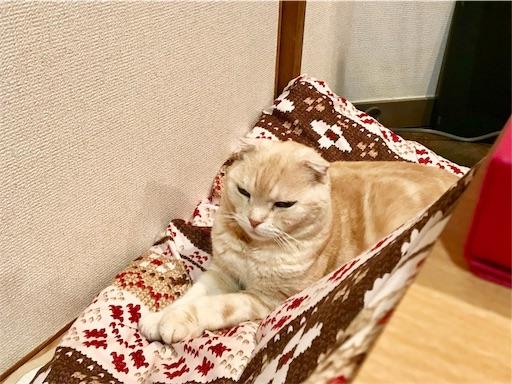 f:id:yutosuna:20210301064641j:image