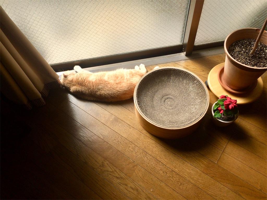 f:id:yutosuna:20210304062042j:image