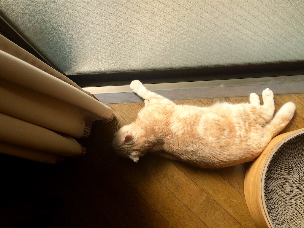f:id:yutosuna:20210304062049j:image