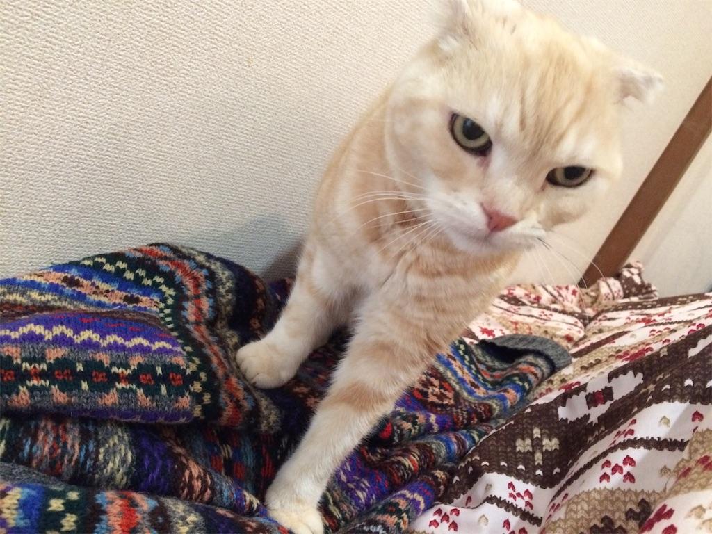 f:id:yutosuna:20210317071052j:image