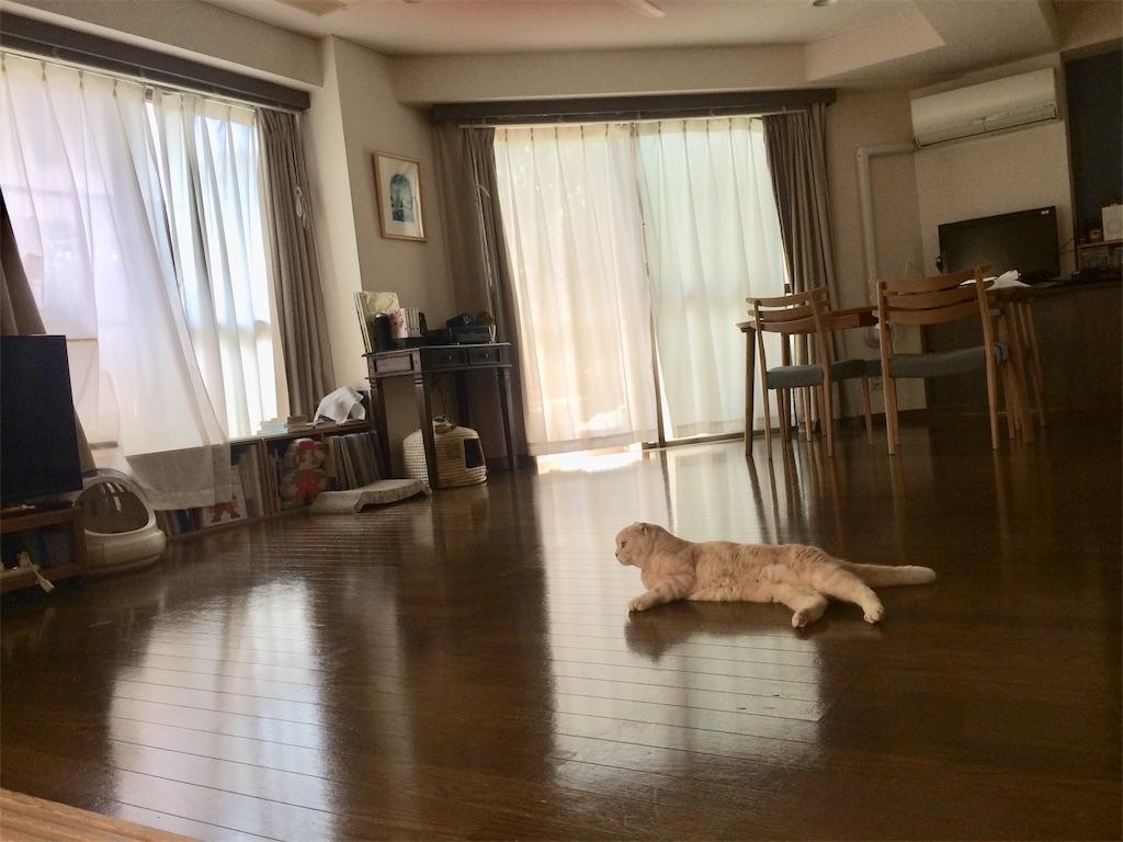 f:id:yutosuna:20210510073801j:image