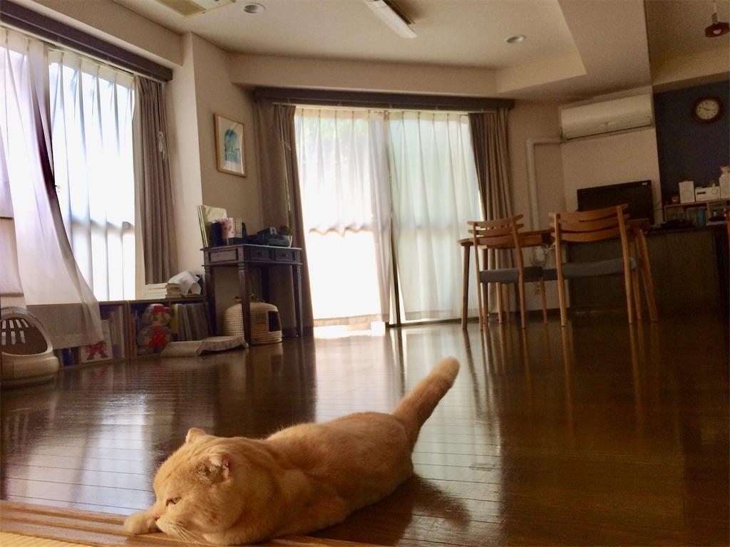 f:id:yutosuna:20210510074330j:image