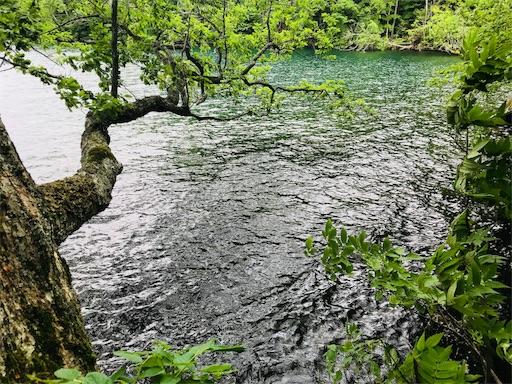 f:id:yuttari-kun:20180728154613j:image