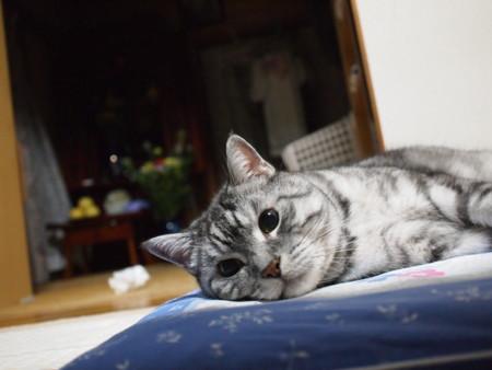 f:id:yuu-asokura:20100921185235j:image