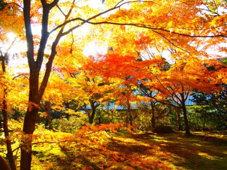 f:id:yuu-asokura:20131120150941j:image