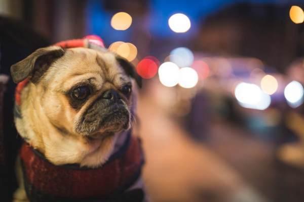 【フェードイン・デモ】夜景と犬