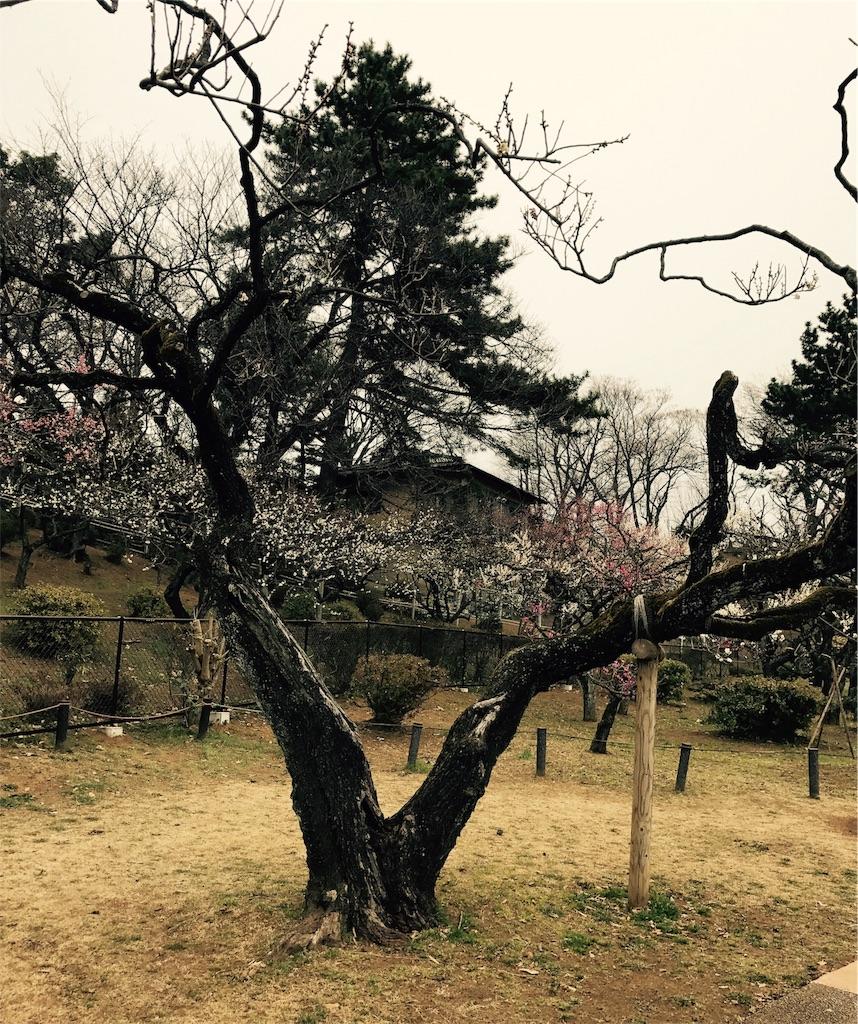 f:id:yuugataJoxaren:20170205232354j:image