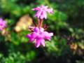 [植物園][花]花1