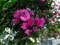 [植物園][花]花2