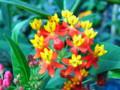 [植物園][花]花3