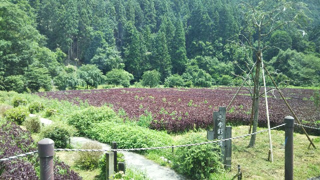 f:id:yuuki-8181:20190823083836j:image