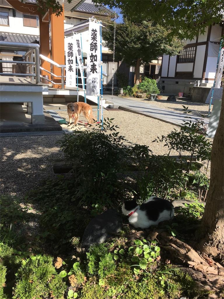 f:id:yuuki-houjyuin:20161106143542j:image