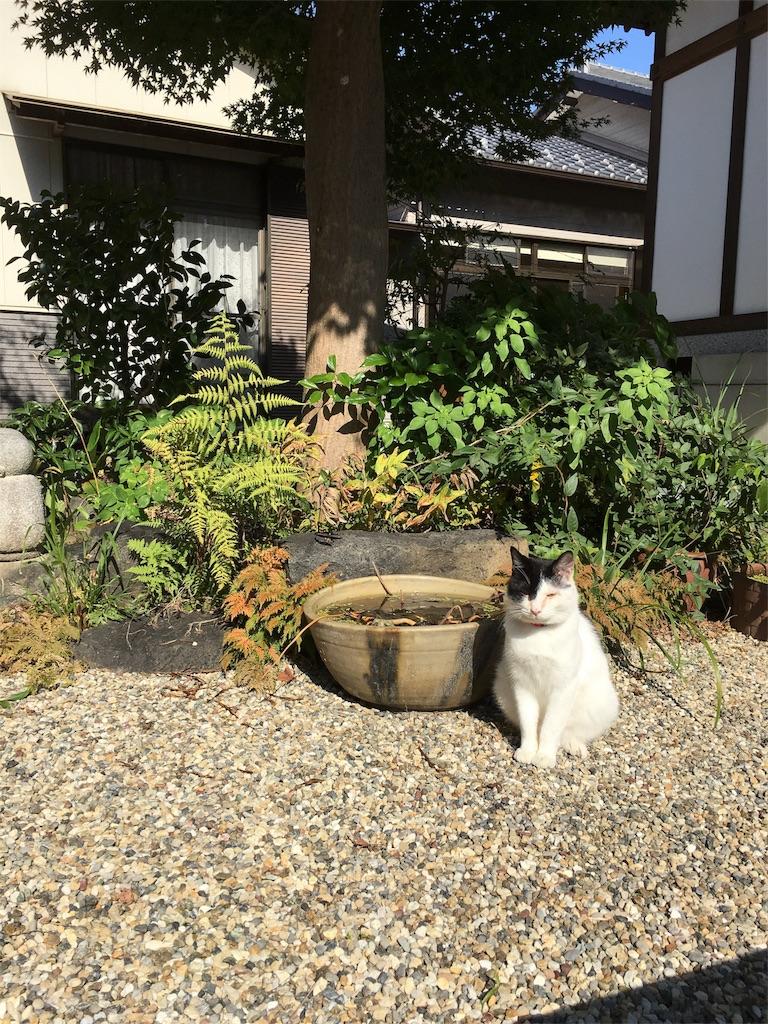 f:id:yuuki-houjyuin:20161106143828j:image
