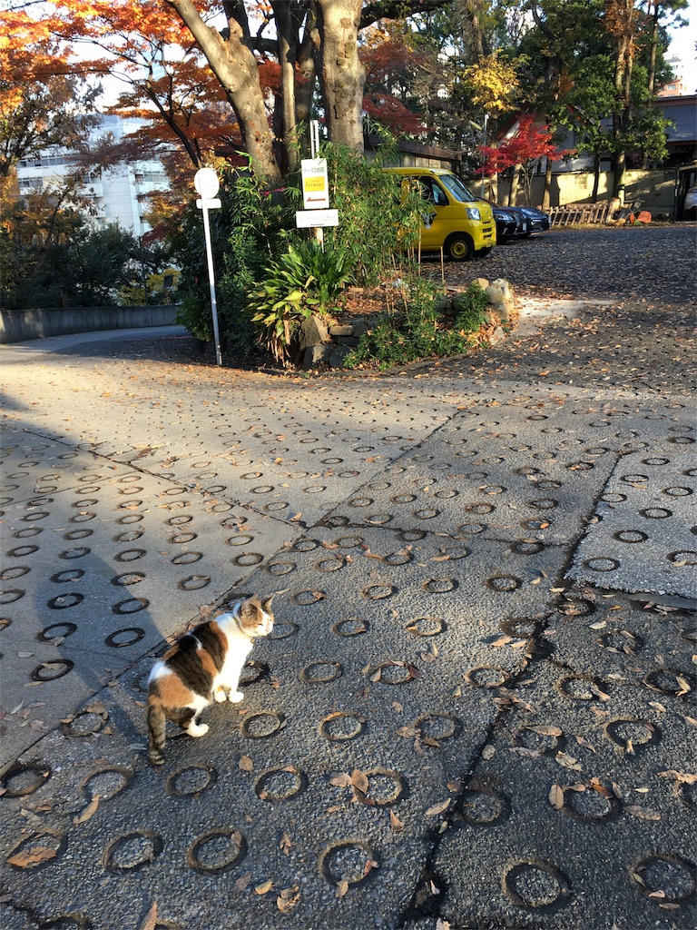 f:id:yuuki-houjyuin:20161206084922j:image