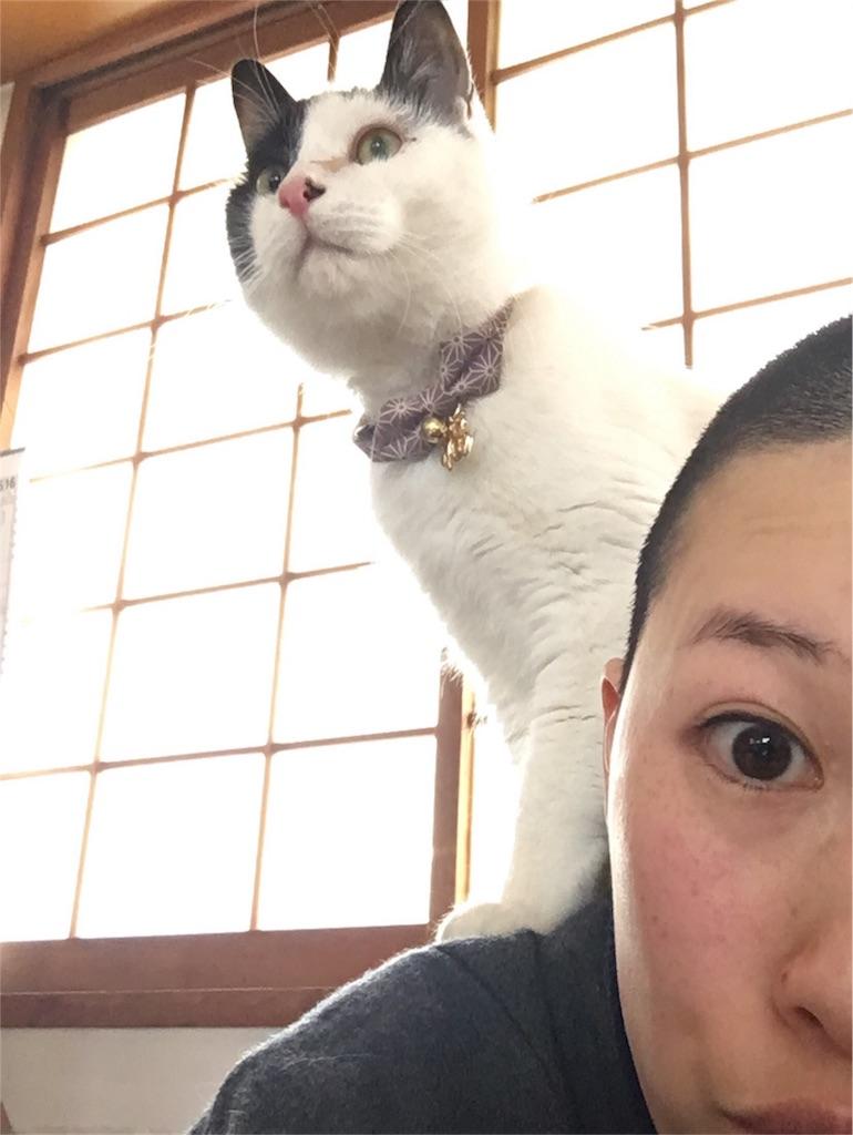 f:id:yuuki-houjyuin:20170223083730j:image