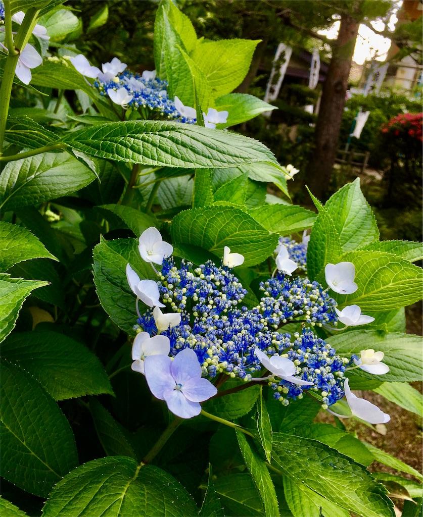 f:id:yuuki-houjyuin:20170612175553j:image