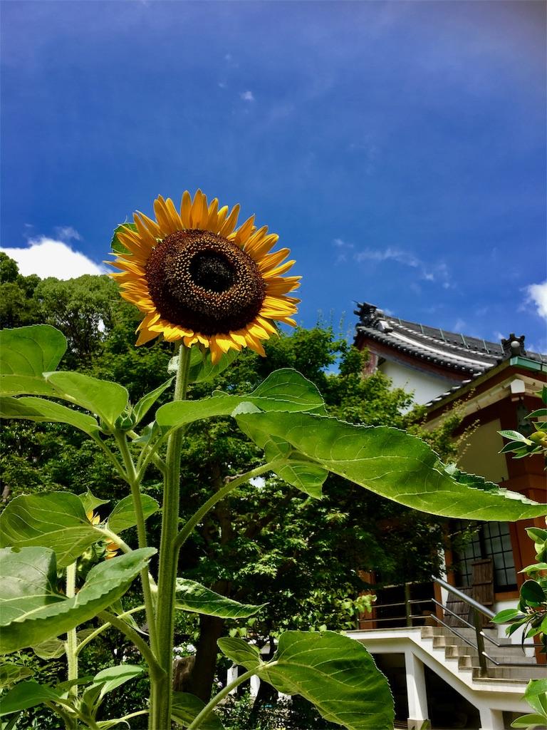 f:id:yuuki-houjyuin:20170706115422j:image