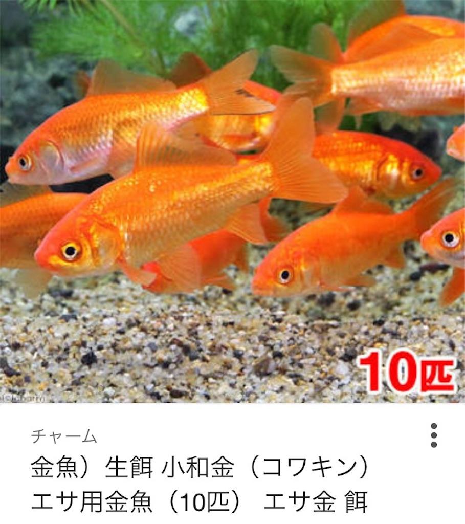 f:id:yuuki-houjyuin:20170820203403j:image