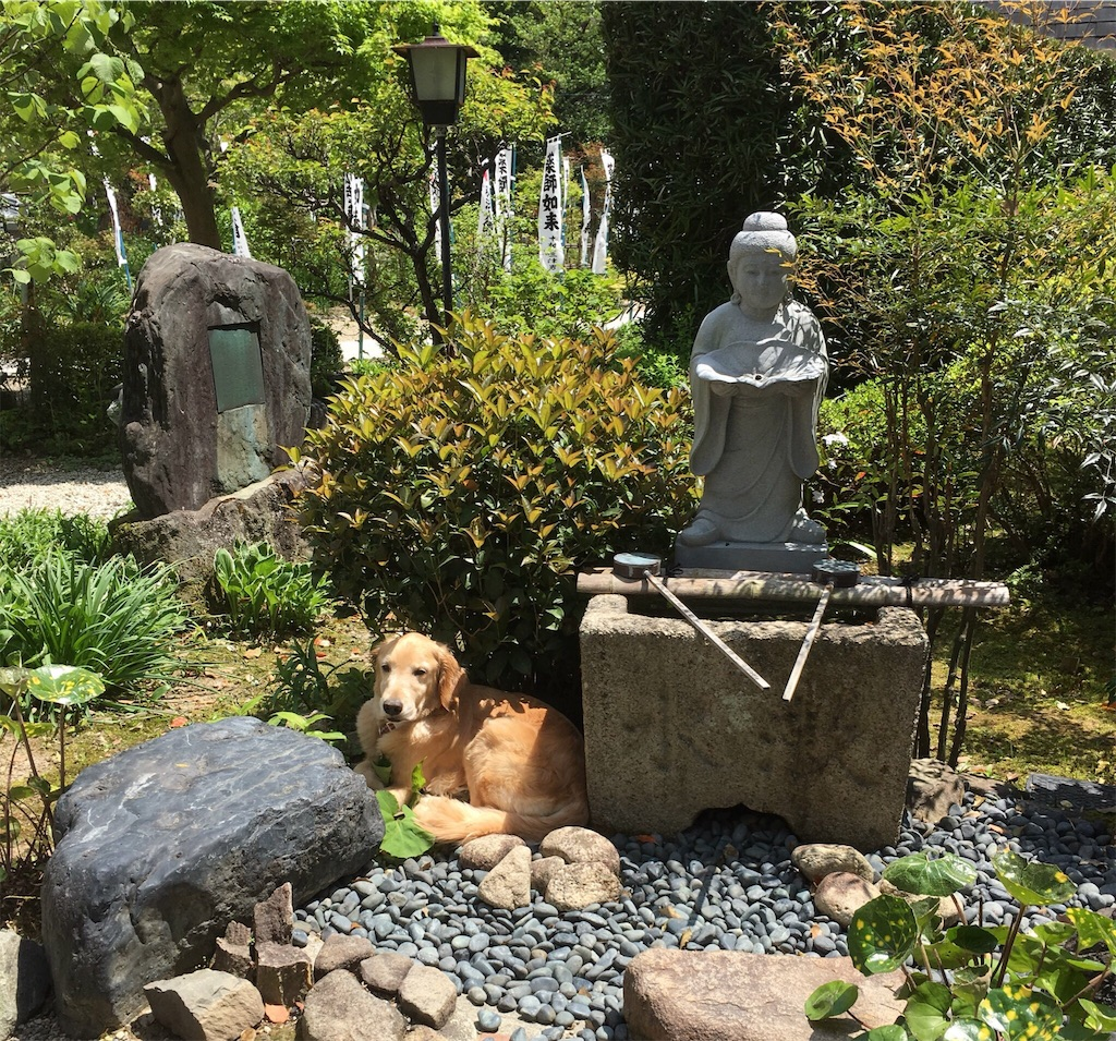 f:id:yuuki-houjyuin:20180522122448j:image