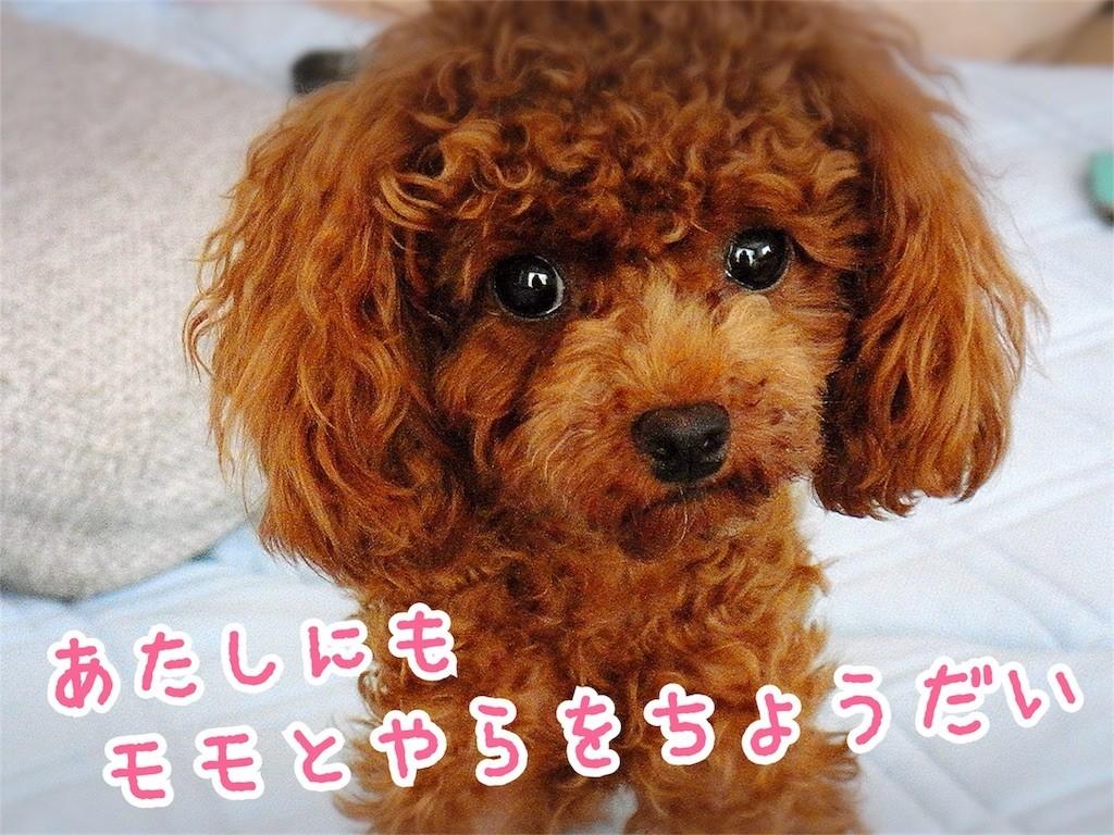 f:id:yuuki-matu1009:20170730165824j:image