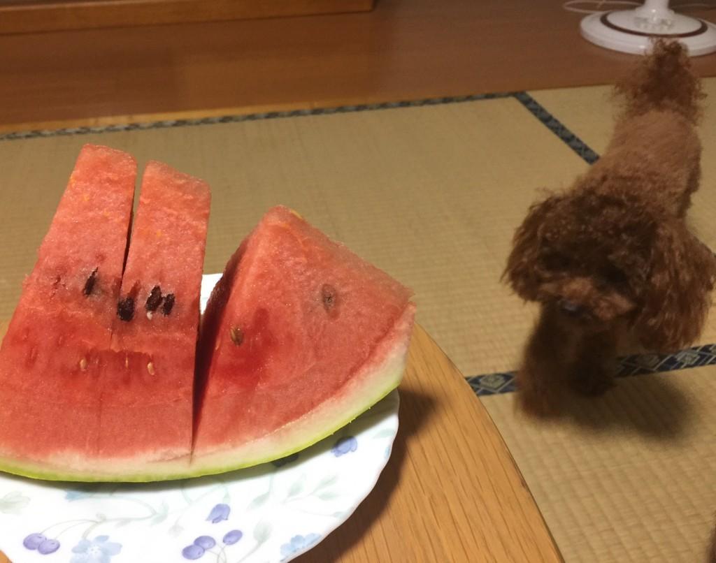 f:id:yuuki-matu1009:20170803191655j:plain
