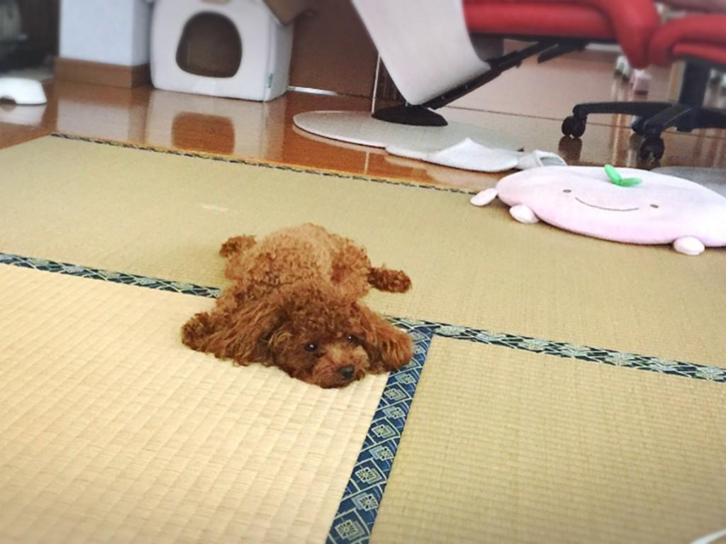 f:id:yuuki-matu1009:20170806101512j:plain