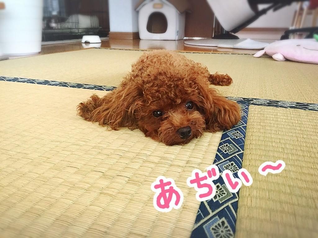f:id:yuuki-matu1009:20170806101629j:plain