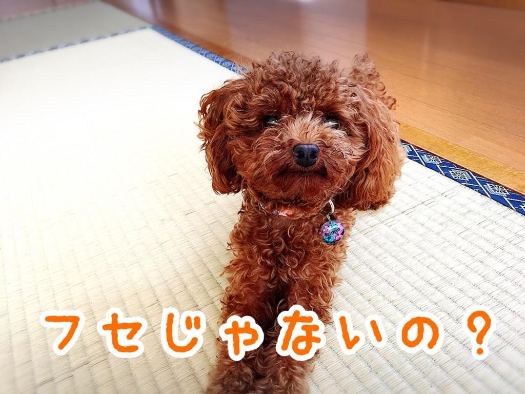 f:id:yuuki-matu1009:20170820130804j:plain