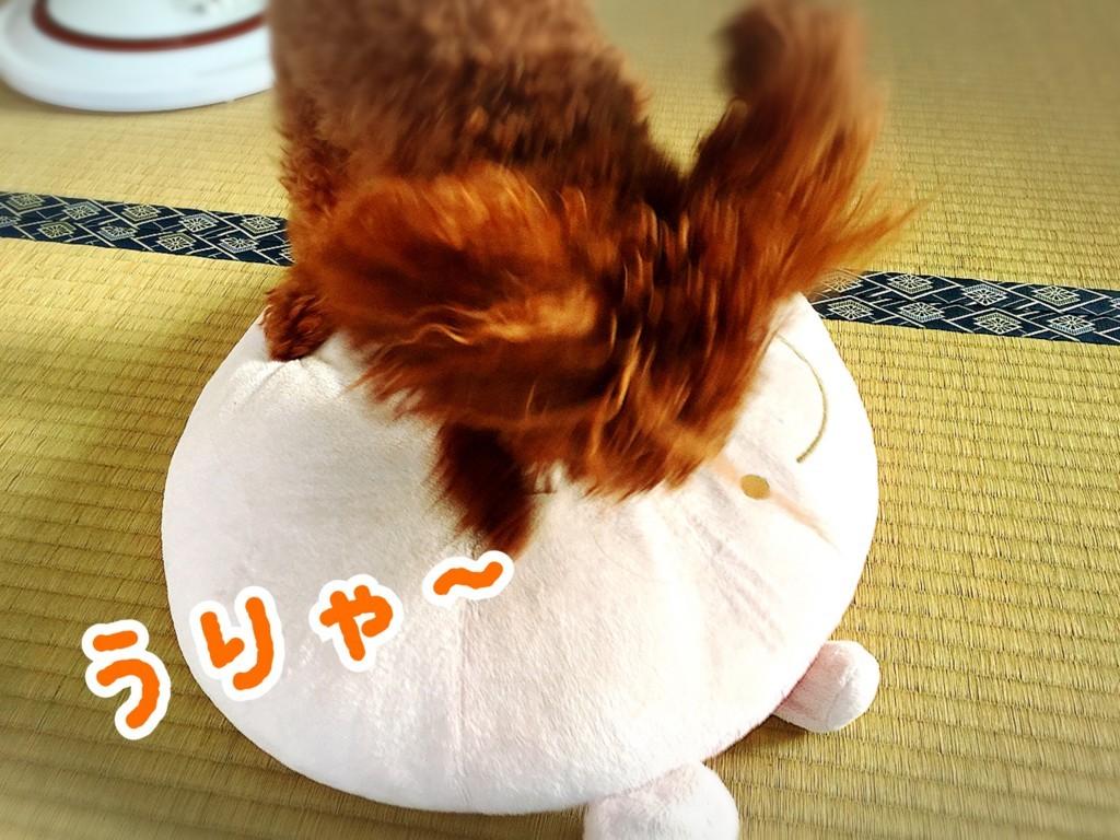 f:id:yuuki-matu1009:20170828101100j:plain