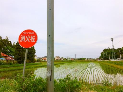 f:id:yuuki-peachtea-0421:20170509104436j:image