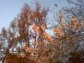季節外れの桜?