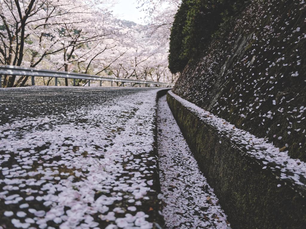 f:id:yuuki89:20180406113443j:plain