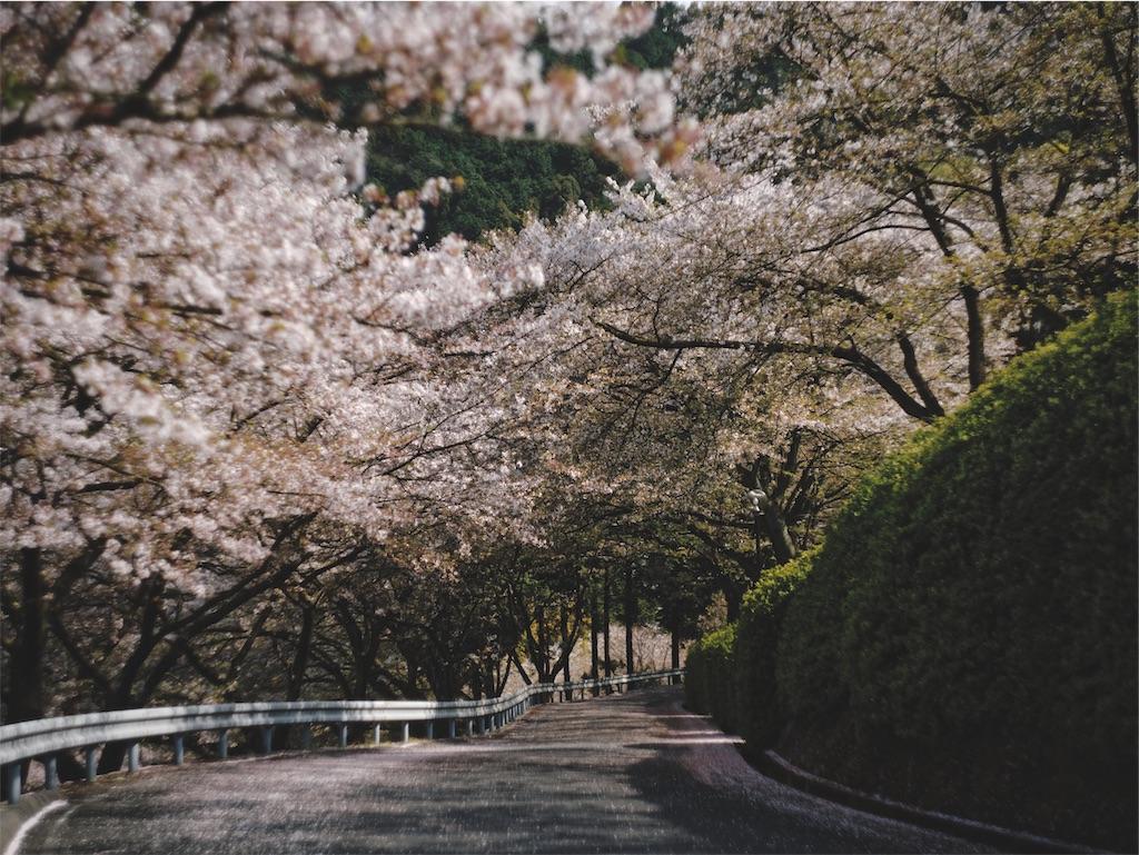 f:id:yuuki89:20190412185222j:image