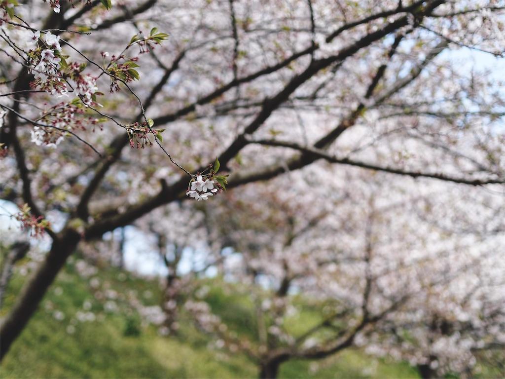 f:id:yuuki89:20190417201855j:image