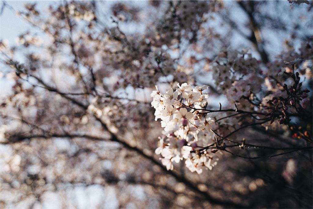 f:id:yuuki89:20200328165510j:image