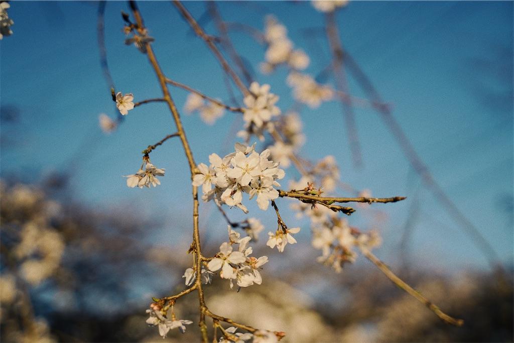 f:id:yuuki89:20200328170033j:image
