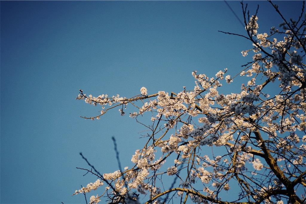 f:id:yuuki89:20200328170138j:image