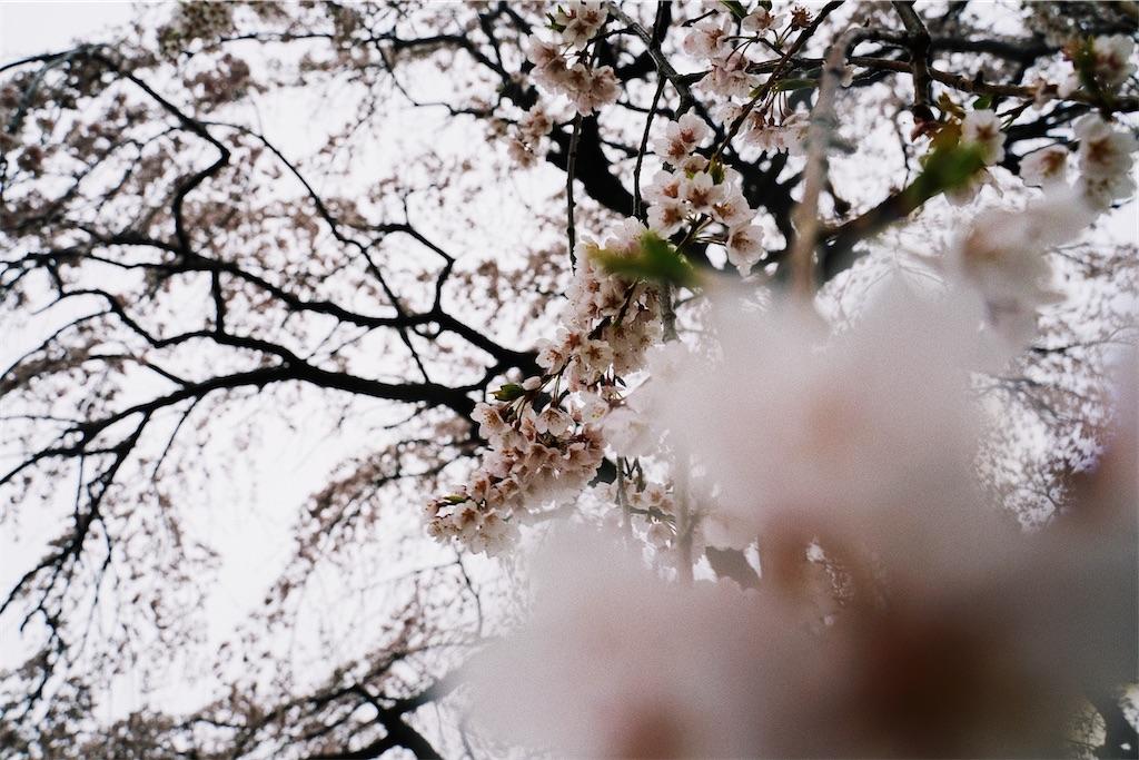 f:id:yuuki89:20200329191442j:image