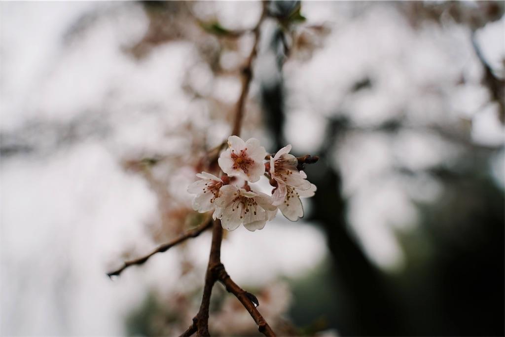 f:id:yuuki89:20200329191455j:image