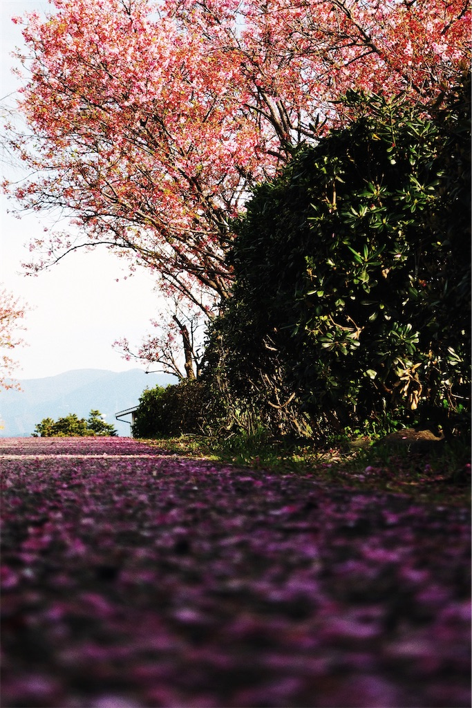 f:id:yuuki89:20200405212038j:image