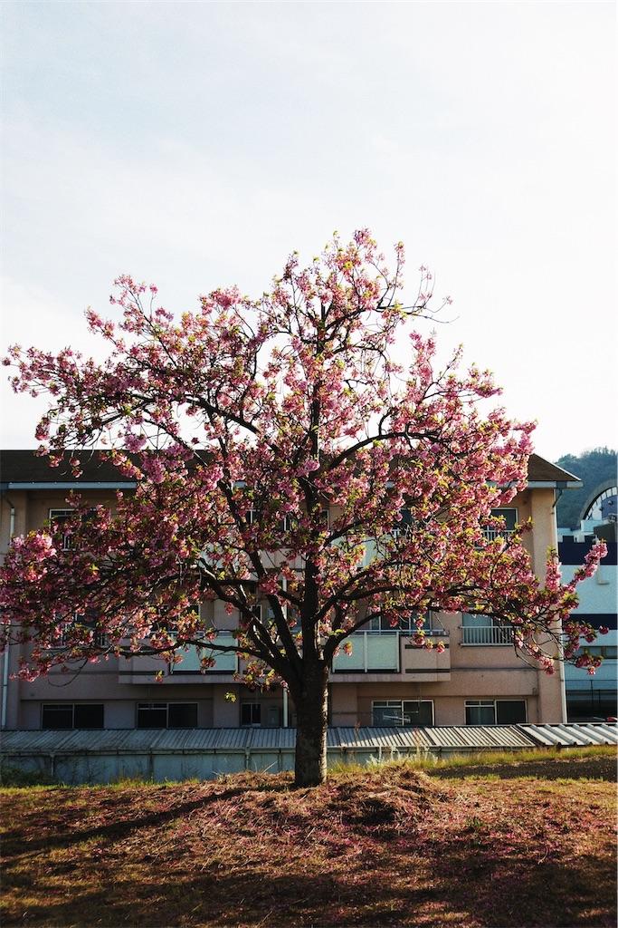 f:id:yuuki89:20200405212043j:image