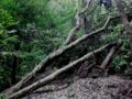 高麗山 倒木後谷原墳墓
