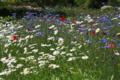 龍宝寺の花達